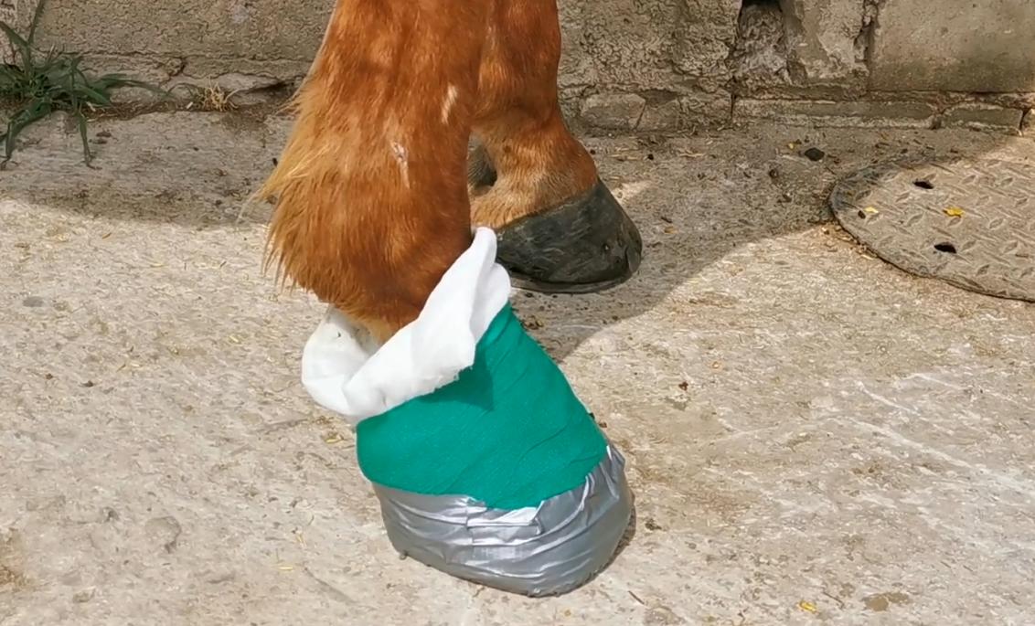 """Lernen Sie im kostenfreien """"Studium für alle"""" Erste-Hilfe-Maßnahmen für Ihr Pferd kennen."""